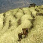 Wheat Terraces